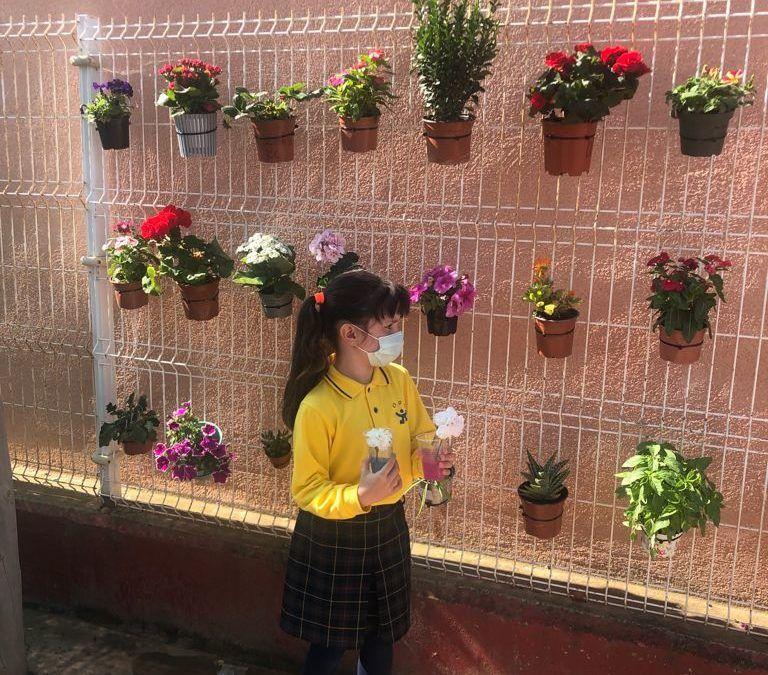Proyecto Mis amigas las plantas